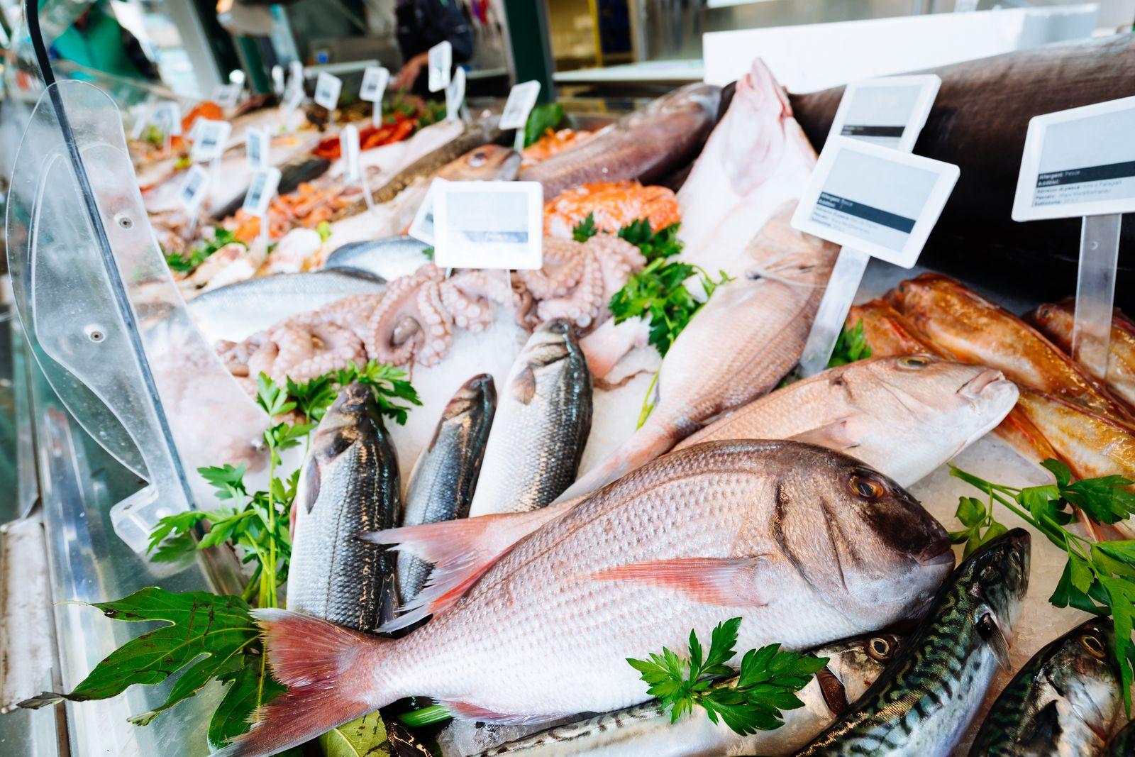 ryby z vody seznamka